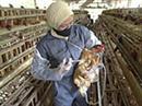 Alle Tiere sollen innerhalb eines Monats geimpft werden. (Archivbild)