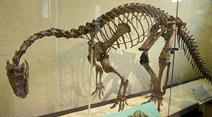 Skelett eines Plateosauriers. (Symbolbild)