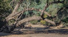 In Simbabwe ist es derzeit sehr trocken.