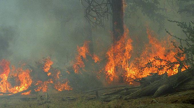 Portugal leidet in diesem Jahr unter einer extremen Trockenheit. Folge: Extreme Brandgefahr.