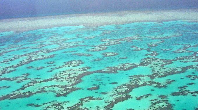 Das Great Barrier Reef leidet extrem unter dem Klimawandel.